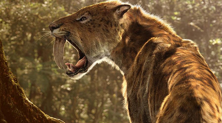 Саблезубый тигр Саблезубый тигр стал первым на планете животным, уничтоженным человеком. Примерно 11 тысяч лет назад наши далекие предки отчего-то невзлюбили этих клыкастых кошек и решили извести их под корень. Совсем недавно подходящие для клонирования останки обнаружились в Калифорнии: проект по воссозданию вида идет уже полным ходом.