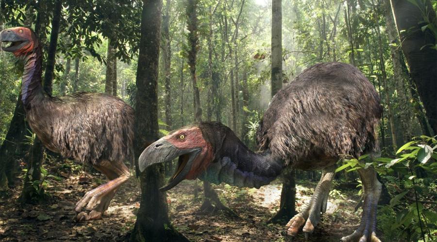 Фороракосовые птицы Во времена миоцена на территории Южной Америки правили бал хищные птицы семейства фороракосовых. Летать они не умели, зато весили полтонны и могли убивать добычу одним ударом метрового клюва.