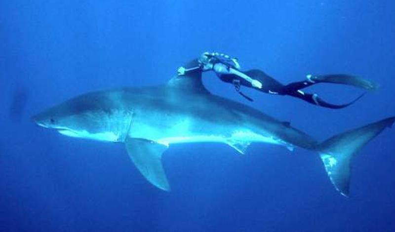 Белая акула Людей за год: 300 Спасибо кинематографу, акул теперь боятся даже малые дети. Отчасти правильно — белая акула действительно способна напасть и убить человека. Вот только за год по вине этих морских хищников гибнет всего три сотни беспечных купальщиков — даже слон выдает результат покруче.
