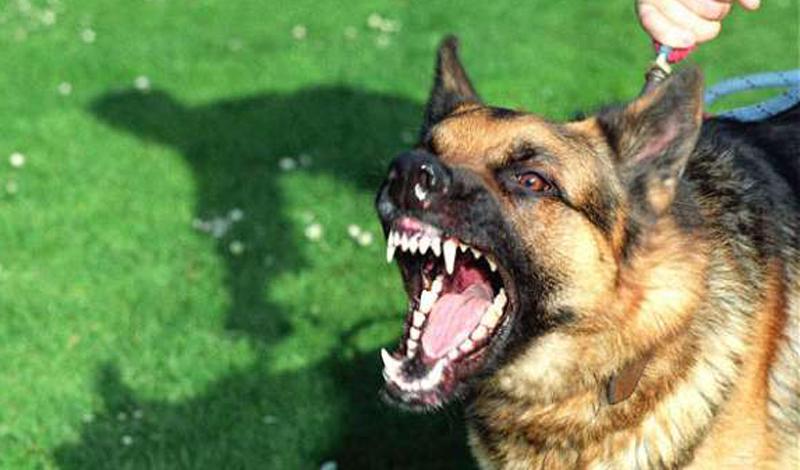 Собака Людей за год: 40 000 Братья наши меньшие? Вот уж вряд ли. Не стоит забывать о том, что собаки это одомашненные тысячи лет назад волки — дикий предок может пробудиться даже в подсознании мелкой болонки. Ежегодно бешеные собаки заражают до 50 000 людей по всему миру, погибает до 40 000.