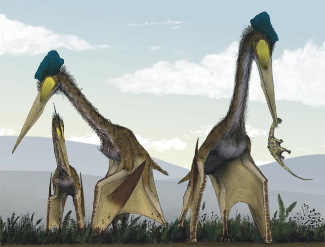 Кетцалькоатль Крупнейший из всех известных науке птерозавров. Он обладал настолько развитыми мускулами, что мог взлетать прямо с места, без разбега. Кроме того, есть предположения, что кетцалькоатль был самым настоящим вампиром, высасывающим кровь своих жертв.