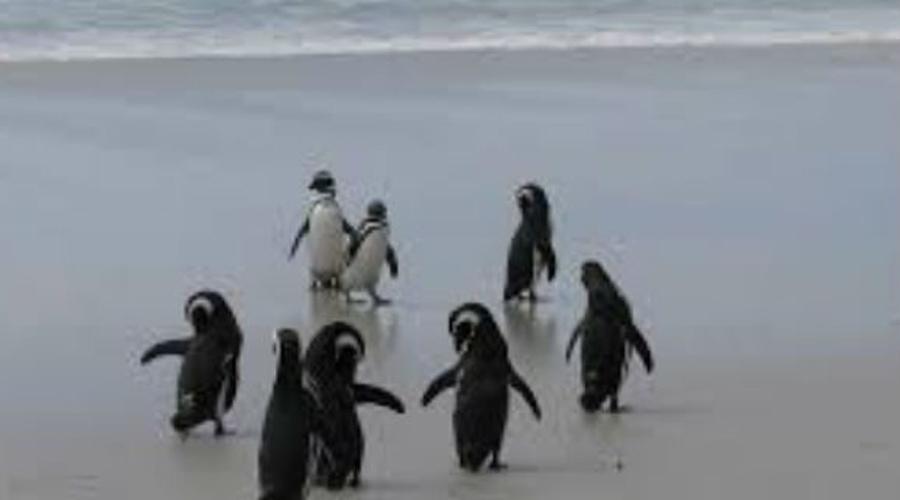 Пляж Херд-Айленд Австралия Политически остров Херд принадлежит Австралии, но географически он гораздо ближе к Антарктиде. Это одно из самых удаленных мест в мире. Пляж острова окружен массивными ледниками. Обманчивый климат уже несколько раз заставал туристов врасплох: за последние десять лет здесь погибло 20 человек.