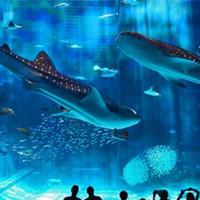 Самые большие океанариумы мира