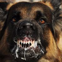 Что делать если напала собака: советы спецназовца