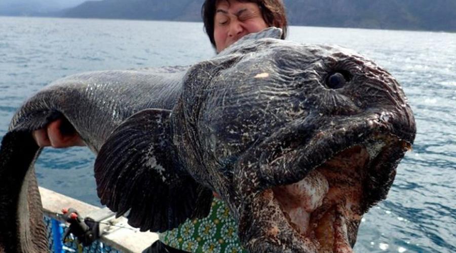 Рыбак и улов чем-то похожи, правда?