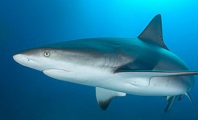 Нападение акулы в реальном времени: американец снял оживший кошмар