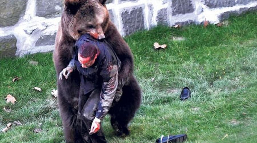 Ужасы зоопарка Конечно, зоопарки задумывались как полностью безопасное место. Люди приходят сюда, чтобы увидеть экзотических животных, верно? Какой может быть риск! Однако реальность расставляет все по своим местам. Даже вольеры, даже глубокие рвы не могут обезопасить человека. Тем более, если он не очень умен. Парень на снимке решил на спор пролезть в клетку к медведю — по счастью, его удалось спасти.