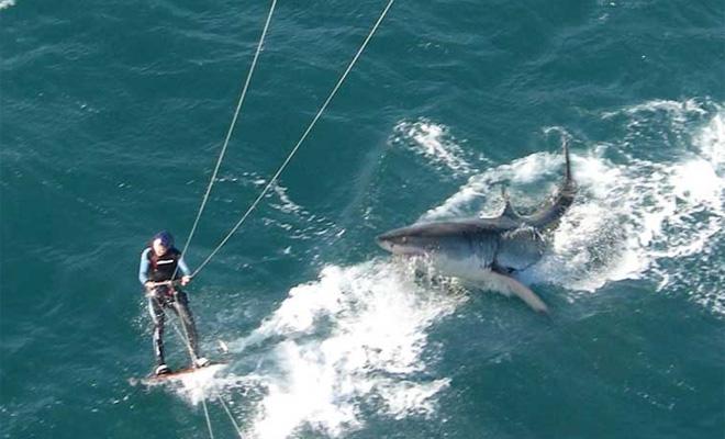 5 кровавых нападений акул, после которых вы больше никогда не захотите в море