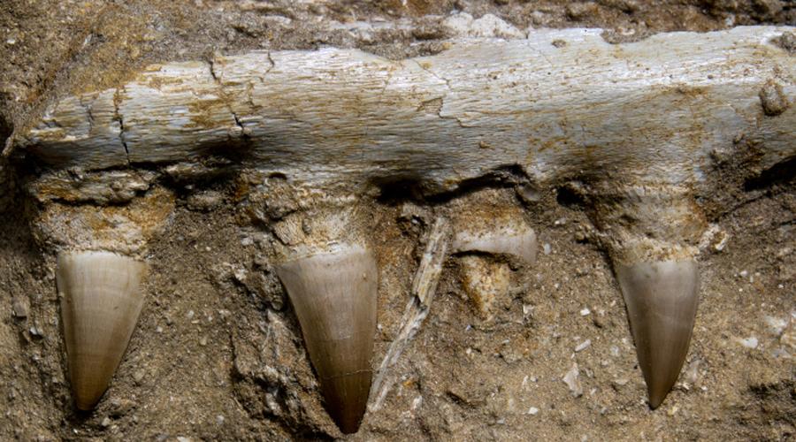 Останки динозавров В начале 1990-х годов ученые с удивлением обнаружили в Антарктиде останки динозавров. Археологи предполагают, что древние создания населяли этот континент примерно 200 миллионов лет назад.