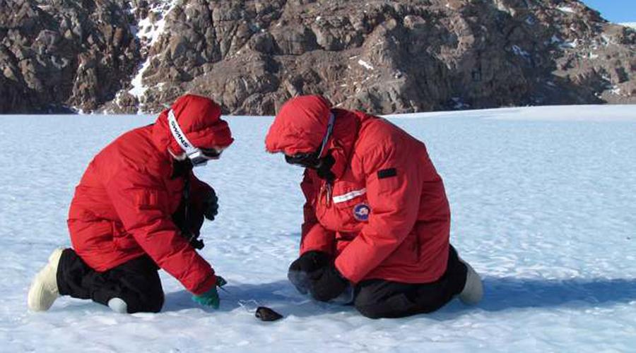 Таинственный древний метеорит В 2015 году ученые НАСА обнаружили в Антарктиде метеорит, упавший еще тринадцать тысяч лет назад. Оказалось, что прилетел он с Марса, а внутри сохранились образцы микробов Красной планеты.