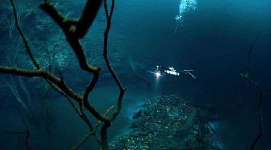 Сенота Ангелита Прекрасные деревья обрамляют берега самой настоящей подводной реки, текущей на дне мексиканской пещеры. Дело в том, что речная вода намного плотнее, чем окружающая. Аналогичные реки есть в Черном море и в бассейне Амазонки.