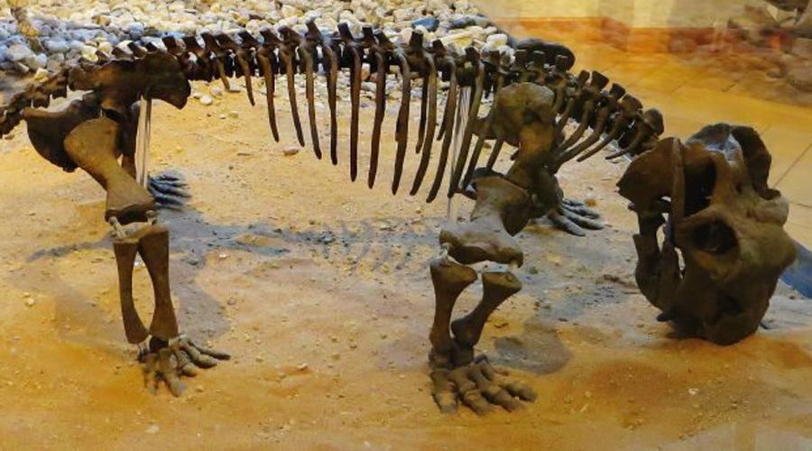 Окаменелые останки В 2009 году археологи нашли вмерзшие в лед останки странного яйцекладущего животного размером примерно с современную нам кошку. Что интересно, этот вид скорее всего пережил глобальное потепление мигрируя из Африки до самой Антарктиды.