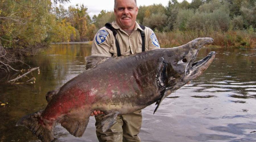 Улов года — Эрни Шортсдейл получил за эту рыбу главный приз в прошлом году.