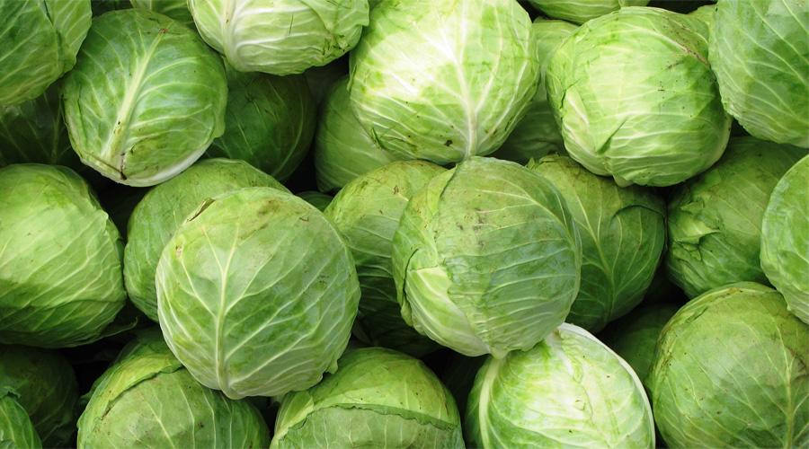 Капуста Всего двести граммов капусты содержит 75% дневной нормы витамина С. Клетчатка способствует сбросу веса, а сера борется с инфекционными заболеваниями.