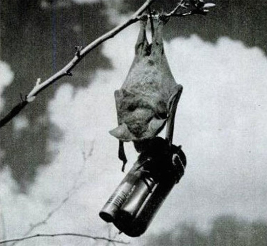 Ужас, летящий на крыльях ночи Атаку планировалось проводить странным и сложным способом. Несчастных созданий выпускали из самолетов на крохотных парашютах, что звучит довольно мило. Проснувшись в воздухе или на земле, летучие мыши должны были инстинктивно найти место гнездования — обычно темное и труднодоступное, вроде чердака. Затем, по мнению изобретателя, начинался настоящий ад.
