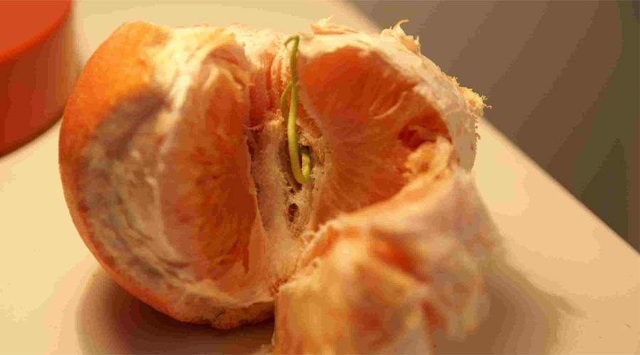 Семена грейпфрута Согласно данным Всемирной организации здравоохранения, экстракт из семян грейпфрута содержит огромное количество антиоксидантов, которые способствуют укреплению иммунной системы.