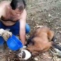 Дальнобойщик рискует жизнью спасая волка! Никто не ожидал того, что будет дальше!