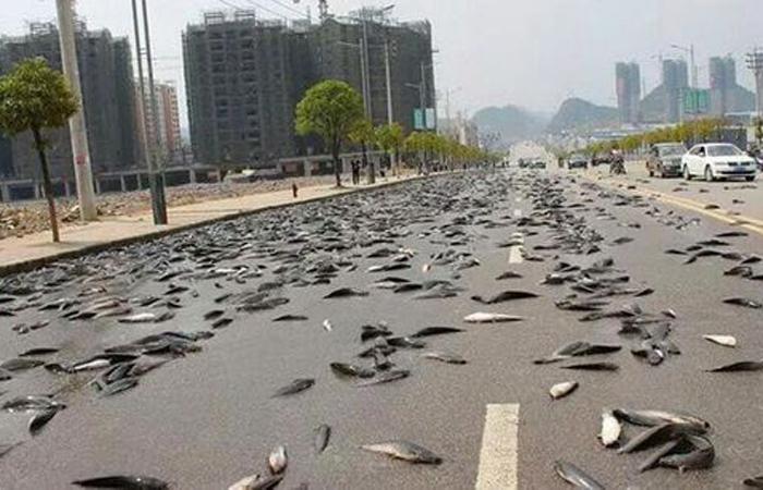 Рыбопад Гондурас, 2003 Вообще говоря, рыбы сыпятся с неба в Йоро практически ежегодно: летние ураганы приносят их из ближайшего озера. Однако, в 2003 году рыбопад больше напоминал апокалипсис, поскольку рыбы падали с неба в течение целых суток.