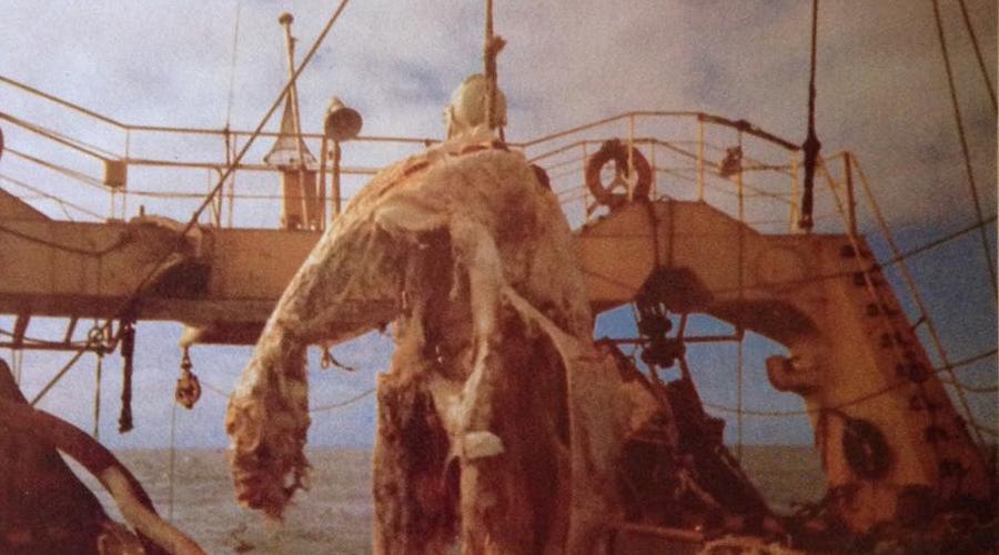 Новозеландское нечто В 1977 году неподалеку от побережья Новой Зеландии японский рыболовный траулер Цуи-Мару поднял из воды плезиозавра. К сожалению, сохранилась только вот эта фотография: рыбаки были вынуждены выбросить тяжеленную тушу обратно в воду.