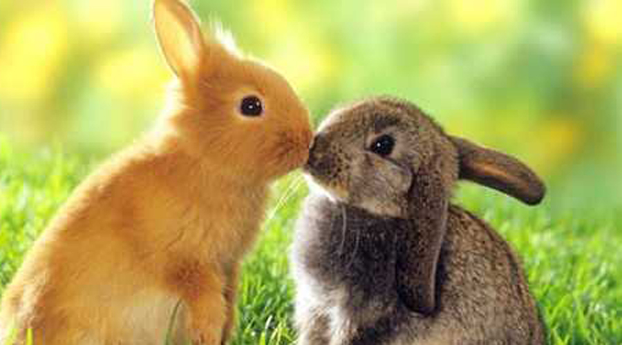 Кролики Не удивляйтесь, но эти маленькие миловидные травоядные млекопитающие занимают третье место по популярности в списке домашних любимцев. Ухаживать за ними проще простого.