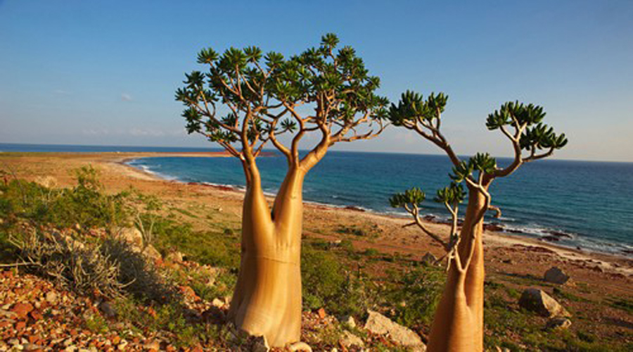 Сокотра Йемен Уникальное место, где обитает почти 700 видов флоры и фауны, которые нигде больше не встречаются на Земле. Кроме того, это еще и одно из самых изолированных мест планеты.