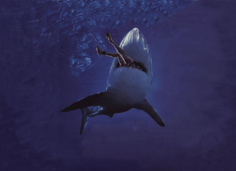 Акула не может быть неподвижной Стереотип о том, что остановка для акулы — смерти подобна, возник из-за отсутствия у этих хищников жаберных крышек. Эти мышцы помогают прокачивать воду через жабры, обеспечивая тем самым постоянный приток кислорода. Поэтому предполагалось, что для бесперебойной вентиляции и омовения жабр акулы вынуждены все время двигаться, пропуская воду через рот. В действительности большинство акул успешно приспособилось отдыхать на мелководье, где приливы и отливы создают постоянное течение и колебание воды, а также в глубоководных гротах и пещерах: здесь нередко наблюдается приток пресной воды с повышенным содержанием кислорода, что позволяет хищникам оставаться подолгу неподвижными и при этом не умереть от гипоксии.  Смотрите программы цикла «Неделя акул» каждый день по 29 июля в 23:00 и 30 июля с 22:00 на Discovery Channel.