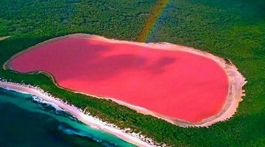 Озеро Хиллиер Австралия Ученые подозревают, что причиной розового цвета этого озера являются микроводоросли Dunaliella salina, которые производят пигмент под названием каротиноиды. Несмотря на то, что озеро Хиллиер имеет высокое содержание соли, в нем совершенно безопасно купаться.