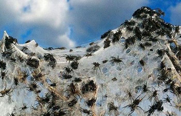 Паучий град Австралия, 2015 Такое могло случиться только в Австралии. Неподалеку от Гоулберна основали колонию пауки, плетущие специальные легкие «парашюты» и таким образом путешествующие по округе. Но внезапный вихрь подхватил всю колонию и десант высадился прямо на головы испуганных австралийцев.
