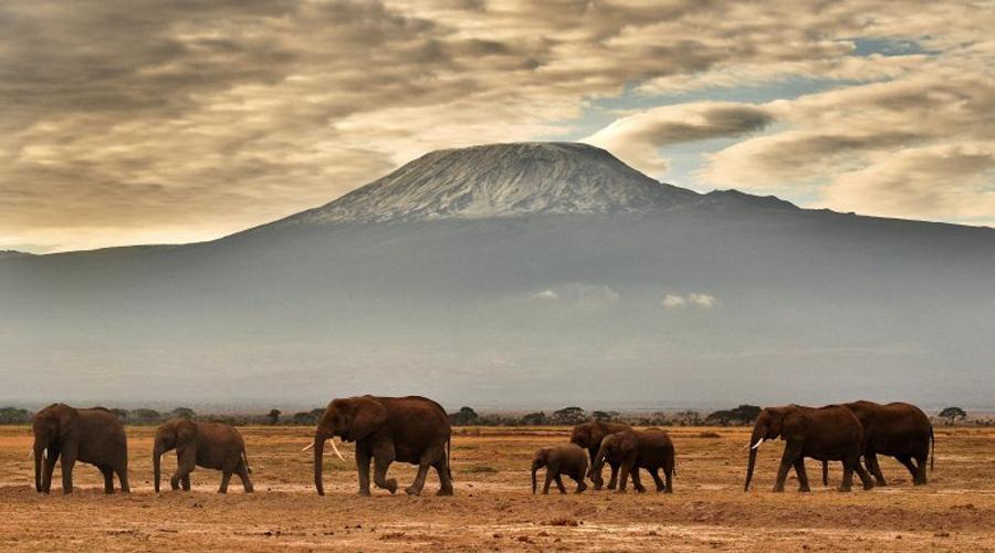 Гора Килиманджаро Территория вершины горы когда-то была полностью покрыта льдом. Сегодня же пейзаж больше напоминает марсианскую пустыню: в период между 1912 и 2011 годами растаяло 85% ледяного массива и климатологи полагают, что остаток исчезнет уже к 2020 году.