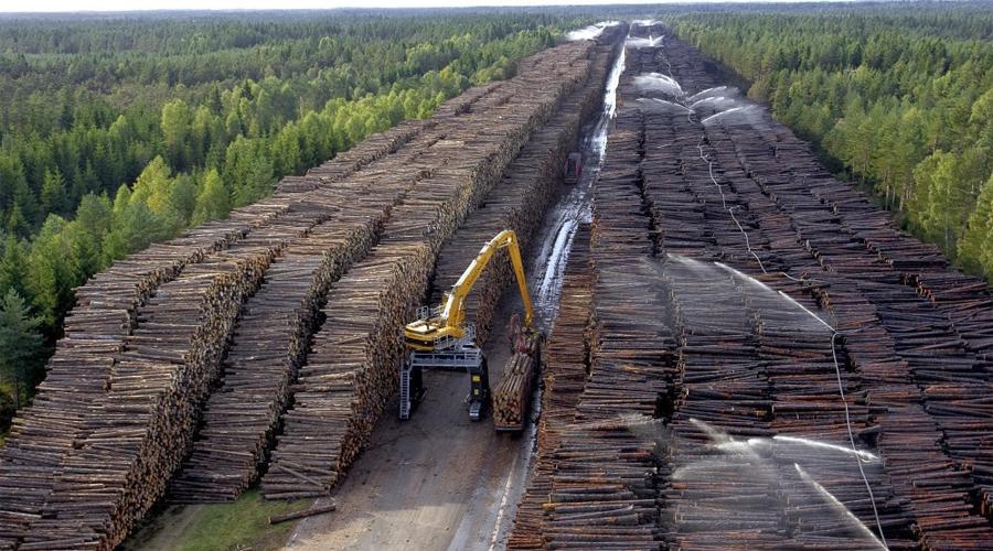 Склад древесины В 2005 году Северная Европа серьезно пострадала от урагана Гудрун. Поваленных деревьев оказалось столько, что бедным шведам пришлось создать отдельный склад. Сейчас его объем оценивается в 75 миллионов кубометров.