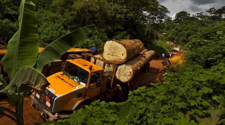 Впадина Конго На территории так называемой Впадины Конго сейчас растет второй по величине тропический лес в мире. Но вряд ли он сохранится до начала XXII века. Каждый год уничтожается около 3,7 миллионов акров. Специалисты Всемирного африканского регионального фонда дикой природы винят в происходящем безудержную эксплуатацию нефти и горной промышленности и, конечно же, лесозаготовки.