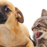 Мохнатые войны: каких животных нельзя заводить вместе