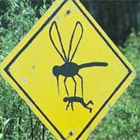 Почему комары кусают вас чаще чем других