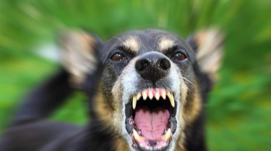 Бешенство Домашний зверек может подхватить это страшное заболевание от дикого собрата. Для человека бешенство смертельно опасно: без вакцинации вирус неизлечим и ведет к летальному исходу.