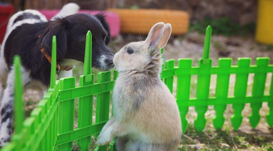 Собаки и мелкие зверьки Абсолютное большинство собак любит гоняться за движущимися объектами. Это охотничий инстинкт, срабатывающий вне зависимости от чувства голода. Повезет ли маленькому кролику в следующем забеге? Ну, это будет зависеть от степени возбуждения пса.