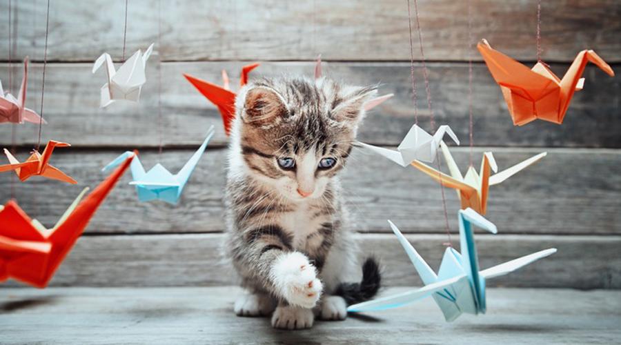Птицы и большинство кошек Кошки прирожденные охотники. В дикой природе птицы для них являются естественным источником пищи и потому не стоит ожидать тут дружбы. Крупная птица может просто забить агрессора клювом, мелкая же сама станет жертвой.