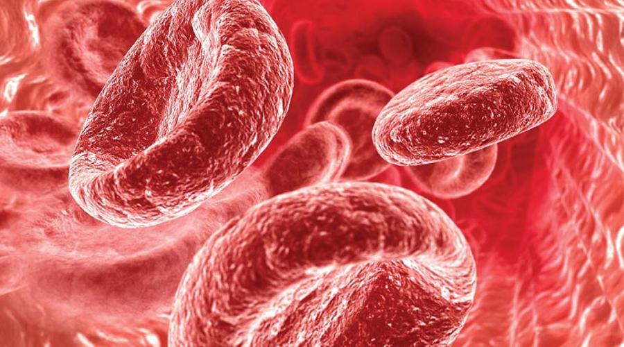 Гемоглобин Норма: 130–160 г/л В эритроцитах находится белок гемоглобин, помогающий регулировать перенос кислорода между легкими и тканями тела. При кровотечении гемоглобин естественно снижается, однако он будет низок и при скрытом поражении внутренних органов. Повышение гемоглобина сигнализирует о какой-то болезни крови или о сердечной недостаточности.