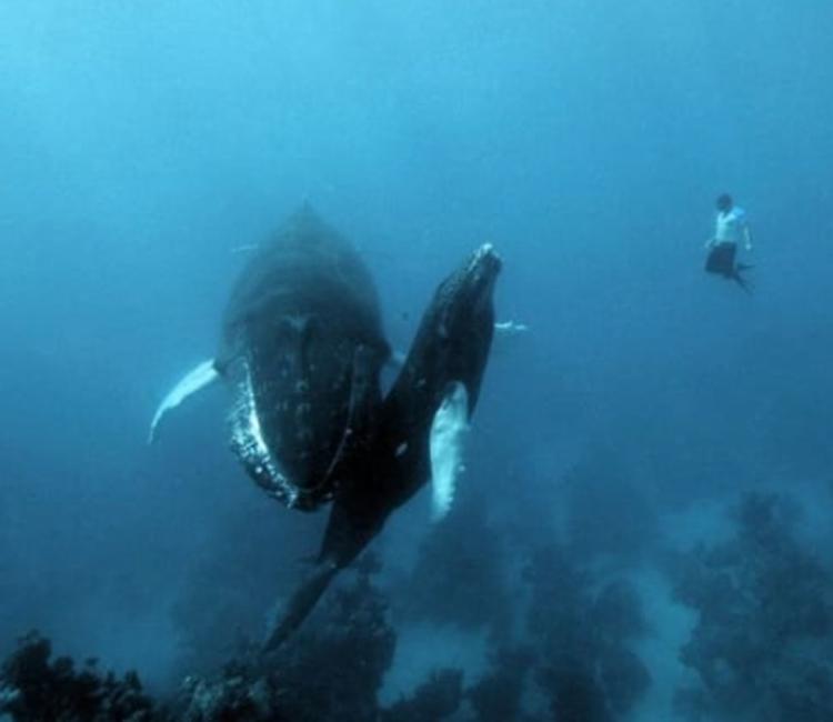 Вы боитесь глубокой воды?