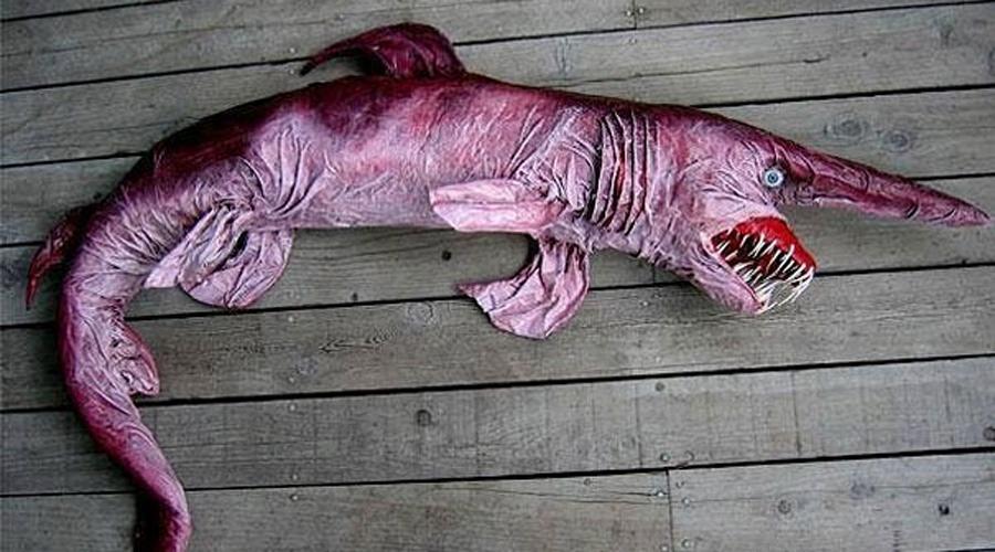 Акула-гоблин Эта редкая акула иногда даже называется «живым ископаемым»: гоблин является единственным сохранившимся представителем семейства Mitsukurinidae с родословной около 125 миллионов лет.