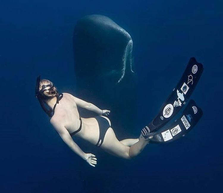 Вы когда-нибудь задумывались о том, что под вами, когда вы плаваете в океане или даже просто глубоком озере?