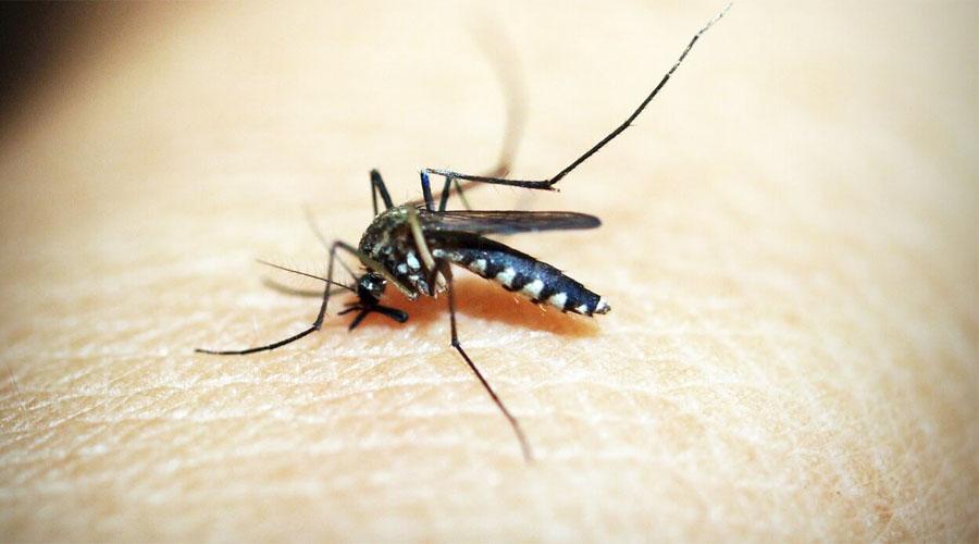 Пиво Наконец, пиво также способствует превращению человека в живую приманку для комара. Согласно исследованию биологов, всего одна бутылка уже делает вас целью атаки.
