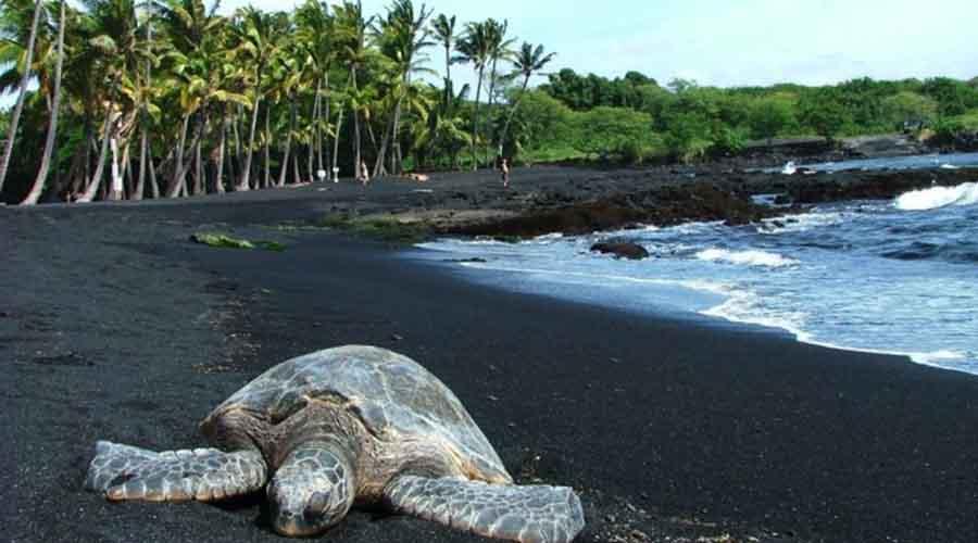 Черный пляж Гавайи Песок на черном пляже вулканического происхождения, отсюда и необычный цвет. Один из самых известных пляжей такого типа — гавайский Пуналуу. Гулять по нему не очень-то приятно, поскольку черный песок нагревается сильнее обычного.