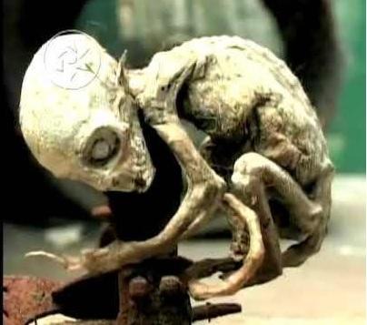 Существо из Метепека В 2007 году мексиканец Урсо Руис, работник на ферме, обнаружил в мышеловке странное существо с непропорционально большой головой. Он показал его коллегам, и вскоре находка получила широкую огласку. Специалисты разводили руками: тесты ДНК не давали вразумительного ответа. Спустя пять лет британский телеканал Channel 4 провел детальное расследование, включавшее продвинутый тест ДНК и видеомаппинг. Приглашенный эксперт, профессор Дональд Квик, однозначно определил «гуманоида» как карликовую обезьяну. В программе телеканала Урсо Руис, по совместительству работающий таксидермистом в зоопарке, на детекторе лжи признался, что снял кожу с мертвой обезьянки, несколько изменил полученное и над всеми подшутил. Возможно, эти манипуляции обусловили некорректные результаты предыдущих тестов ДНК – если они вообще проводились. Надо заметить, что в жизни карликовые игрунки, или мармосеты, весьма страшны на вид без всяких мистификаций.