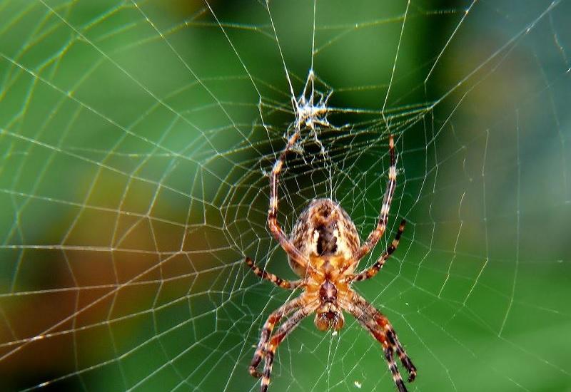 Пауки Численность: не поддается подсчету Главное преимущество перед человеком: внушают ужас Пауки есть почти в каждом доме на всех континентах. По оценкам биологов, пауки ежегодно съедают больше белковой пищи, чем в совокупности весит все человечество. Они – прирожденные восьмиглазые охотники, и они ненасытны. К счастью, разные виды пауков враждуют и не смогут объединиться против нас. Но будьте уверены: пока вы читаете, за вами наблюдают.