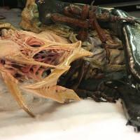 В арктических льдах обнаружили чудовищное нечто