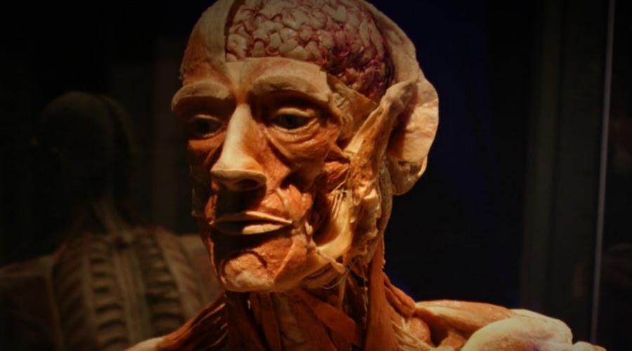 Поехали на выставку А еще ваше тело вполне могут пластинировать и отправить затем на выставку. Пластинацией называется особый способ консервации трупа — все жидкости заменяются синтетическими полимерами и тело превращается в своебразную полупластиковую куклу.