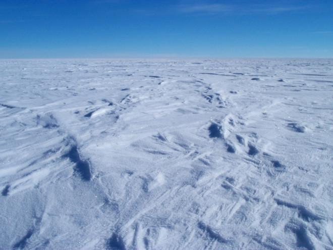 В антарктических льдах нашли существо, ранее неизвестное науке