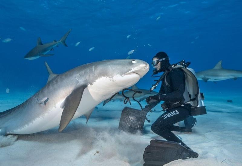 9 ситуаций, когда от акул только польза