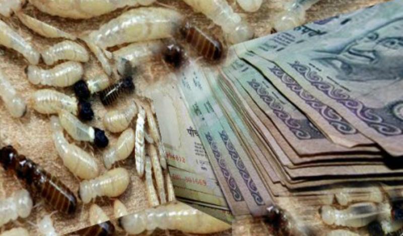 Термиты Расположенный в Мумбаи банк был вынужден объявить о банкротстве после того, как в 2011 году в его хранилище проникли орды термитов. Зловредные насекомые уничтожили около десяти миллионов долларов.