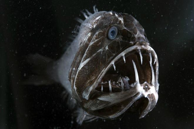Бездна ужаса: ученые спустились на самое дно океана и чуть не поплатились за это жизнью!
